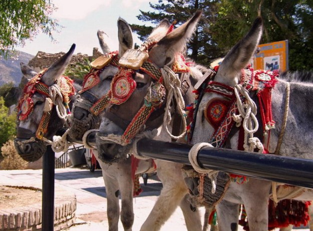 donkey-taxis-colourful